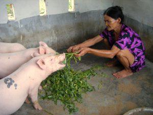 Projekt Schweinehaltung - der Anfang